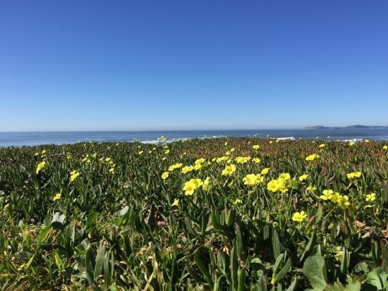 Half Moon Bay State Beach: Flowers & ocean