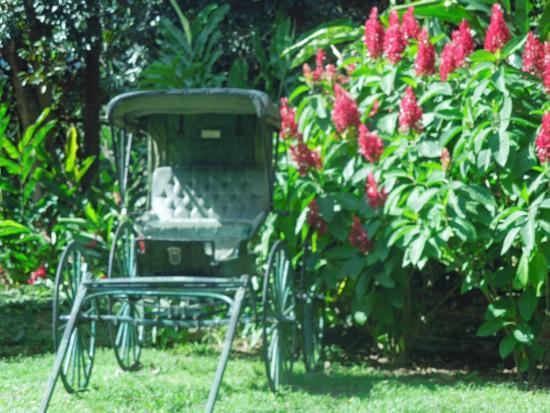Jardin prehistorico picture of caguas botanical garden for Bodas jardin botanico caguas