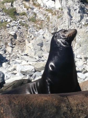 Red Travel Mexico: Sea Lions, Cabo Pulmo