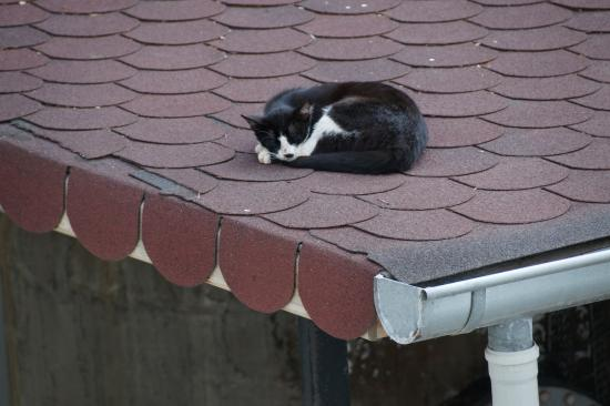 Hotel Linda: Cat sitting on Linda's laundry roof