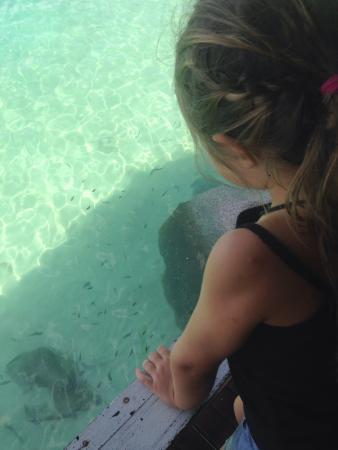 Taatoh Resort & Freedom Beach Resort: Les poissons depuis l'hotel