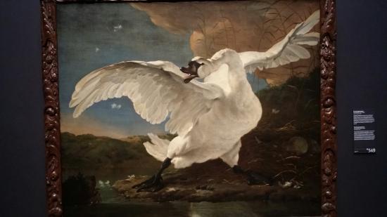 The Threatened Swan