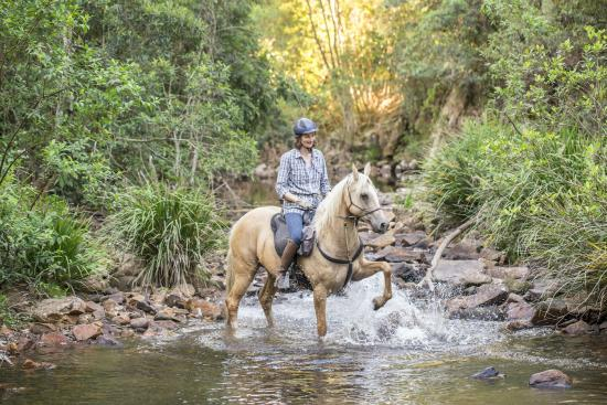 Lorne, Australia: Kerewong State Forest Creek Crossing horseriding New South Wales