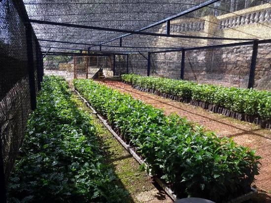 Jardim do Museu  Foto di Fazenda Nossa Senhora da Conceicao, Jundiai