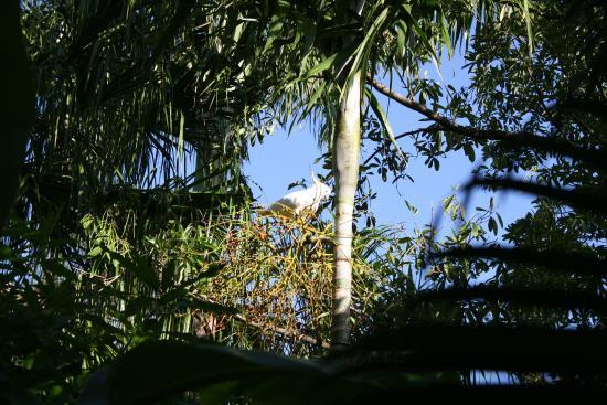 Parkwood B&B: Kakadu im Garten
