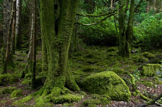 Some moss-covered tree roots in an awesome-looking forest : pics