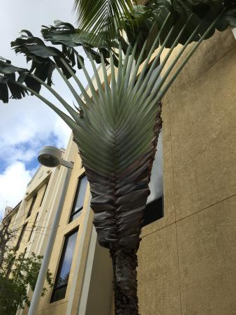 Best Western Plus Kendall Hotel & Suites : Love the Palm Trees! BW Kendall, FL