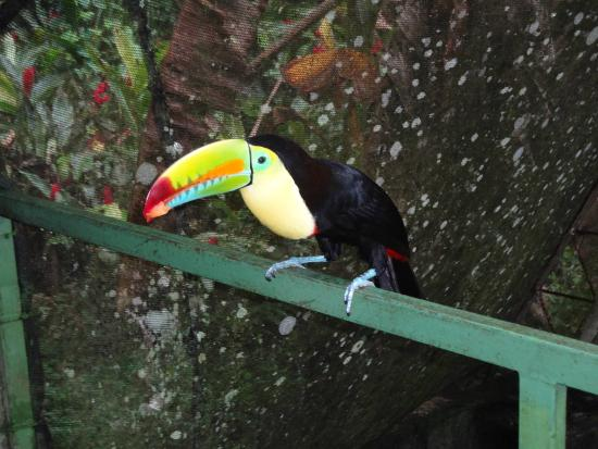 Costa Rica Wildlife Sanctuary: A close up of the toucan