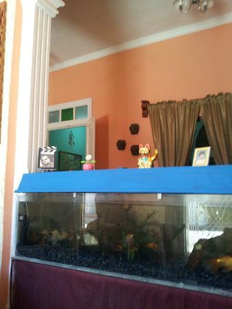 Hostal Tito y Vicky: Pecera gigante en el salón