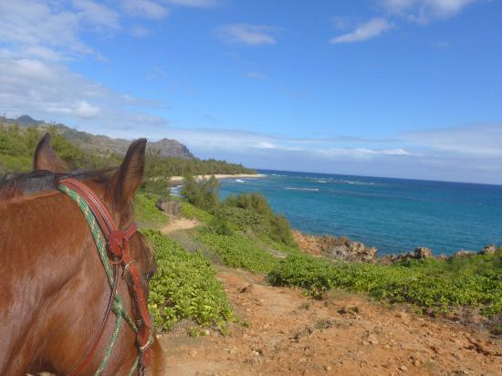 CJM Country Stables: Mongoose overlooking Maha'ulepo