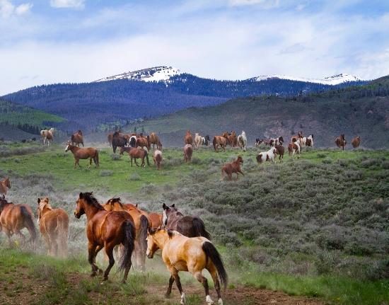 C Lazy U Ranch : Horses running through sagebrush