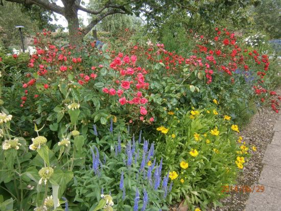 Gunby Hall and Gardens: Pretty flowers in the garden at Gunby House