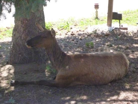 Estes Park Bed & Breakfast: Friendly Visitor.
