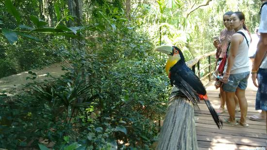 very nice macaw - Picture of Parque das Aves, Foz do Iguacu ...