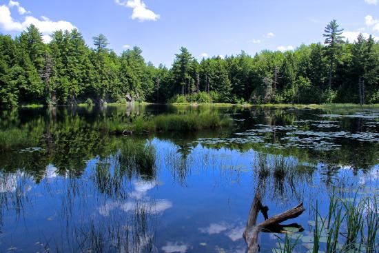 Half Moon State Park: Moscow_Pond_01