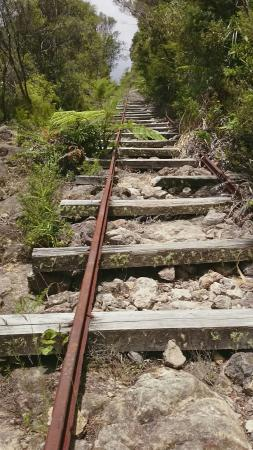 Coromandel Forest Park: Old train tracks on the Billy Goat track to the pinnacles.