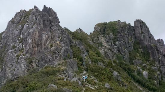 Coromandel Forest Park: Pinnacles