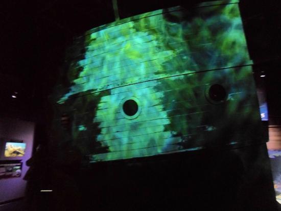Stingray Picture Of Great Lakes Aquarium Duluth