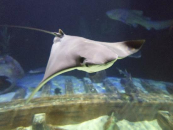 Lakes Aquarium Related Keywords & Suggestions - Lakes Aquarium Long ...