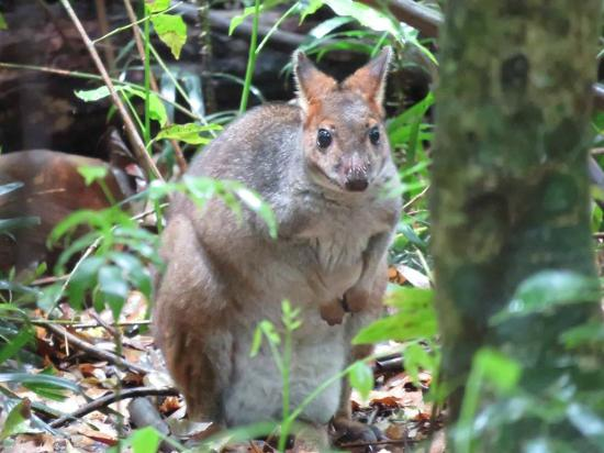 Vision Walks - Eco Tours: Pademelon