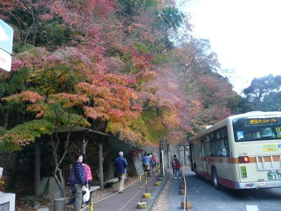 Oyama Cable: 大山ケーブルバス停