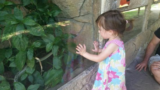 Perry's Bridge Reptile Park: Child friendly