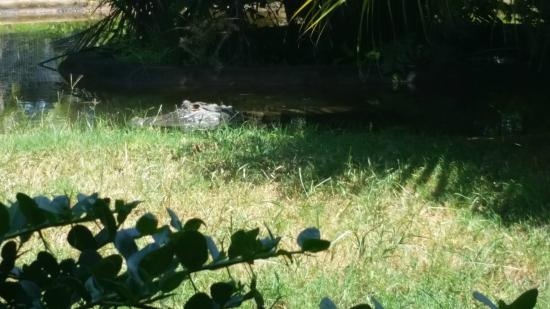 Perry's Bridge Reptile Park: Can see crocs and alligator UP CLOSE
