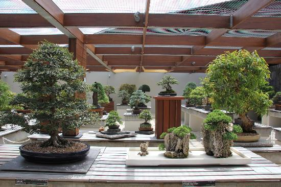 National Bonsai & Penjing Collection
