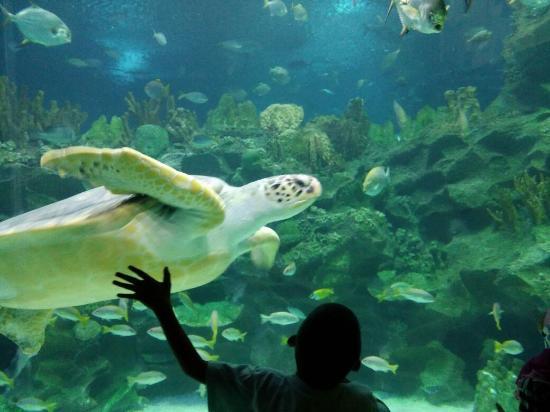 aquaria - Picture of Aquaria KLCC, Kuala Lumpur - TripAdvisor
