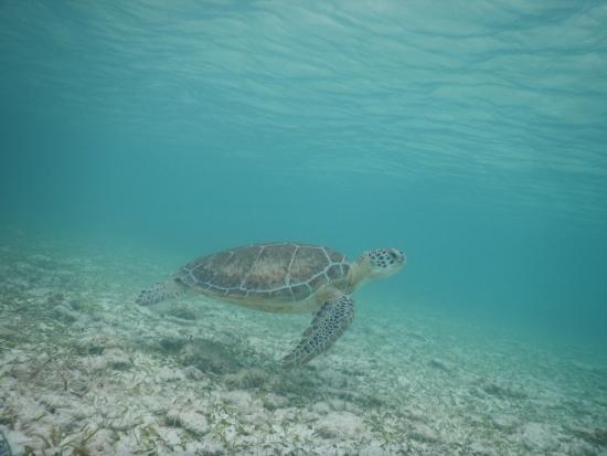 Spotts Beach Beyond The Nice And Snorkeling Best Place To See Turtles
