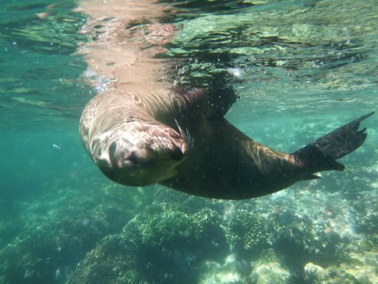 Posada Colibri: Daytrip to the Espiritu Santu island, snorkeling with friendly sealions
