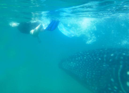 Posada Colibri : swimming with whale sharks @La Paz - a MUST