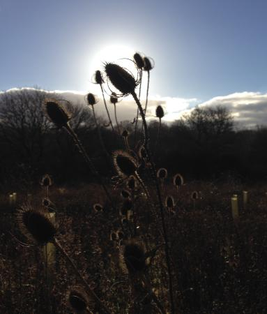 Winter walks from Mulberry cottage