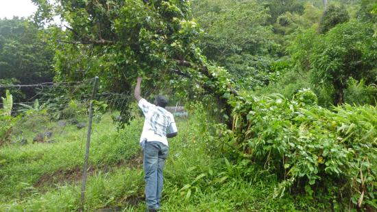 Henry Safari Tours: Picking Herbs by the road side