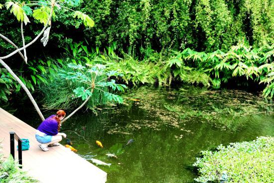 Merveilleux Kula Botanical Garden: Koi Pond
