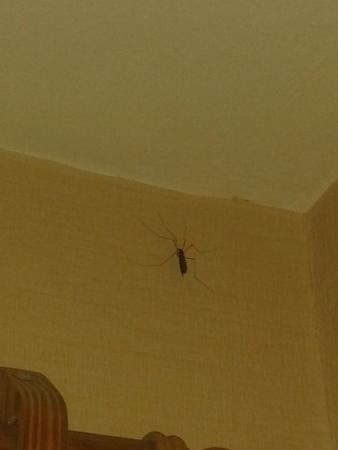 Soft Bariloche Hotel: Araña en la Pared