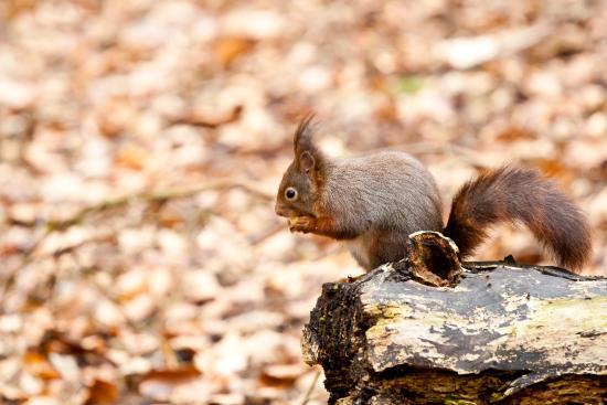 Freshfield Squirrel Reserve