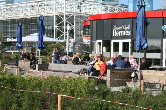 Grandcafe Hermes : nieuwe planten rond het terras