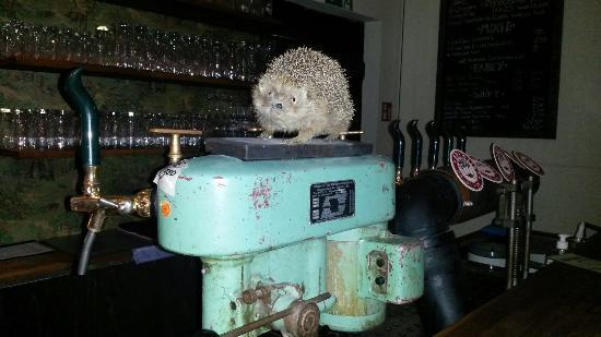 zapfanlage mit igel bild von hopfenreich craft beer bar berlin bar pub berlin tripadvisor. Black Bedroom Furniture Sets. Home Design Ideas