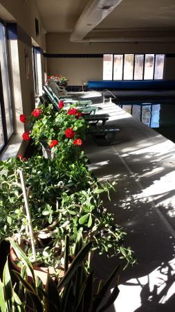 Comfort Inn: Plants in the pool room
