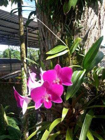Pousada da Jiboia: Flor no estacionamento