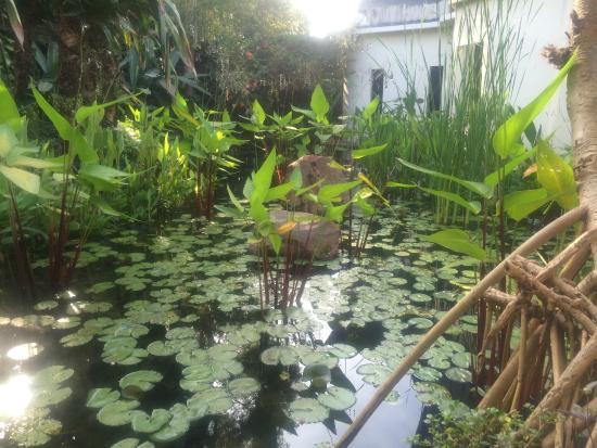 Amatao Tropical Residence: Gardens @ Amatao