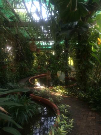 Amatao Tropical Residence : Grounds