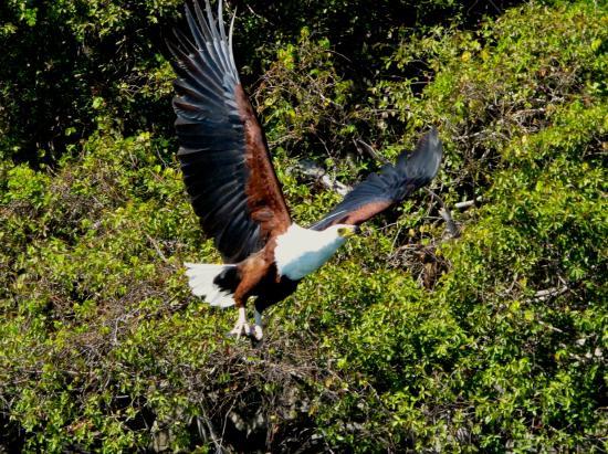 Thumbi View Lodge: fish eagles