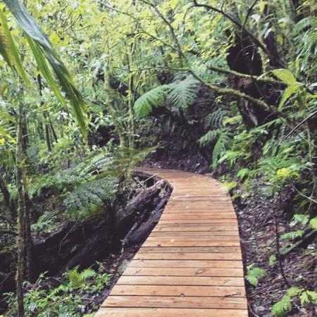 Parque Nacional La Tigra: Sendero La Esperanza