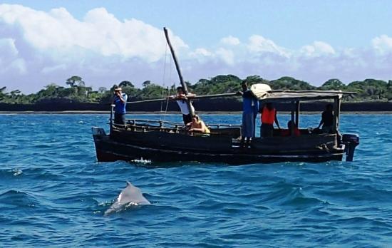 Shimoni, Kenya: Dolphin-spotting