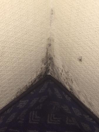 Hotel Viktoria Neuss : schimmelige Wand