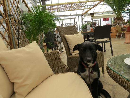 Lowden Garden Centre: dog friendly dining