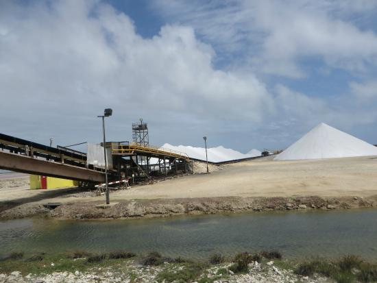 Flamingo Sanctuary: salt