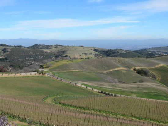 Wine Wrangler - Day Tours: View from Daou Vineyards
